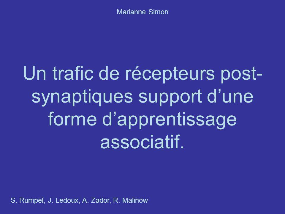 Un trafic de récepteurs post- synaptiques support dune forme dapprentissage associatif.