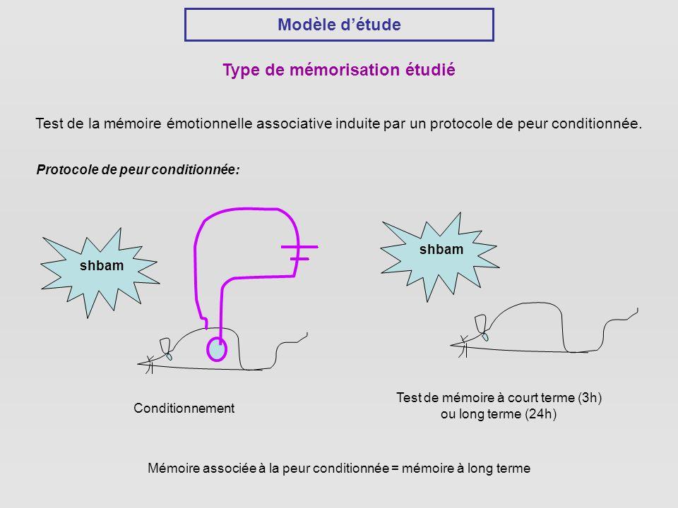 Modèle détude Type de mémorisation étudié Test de la mémoire émotionnelle associative induite par un protocole de peur conditionnée.