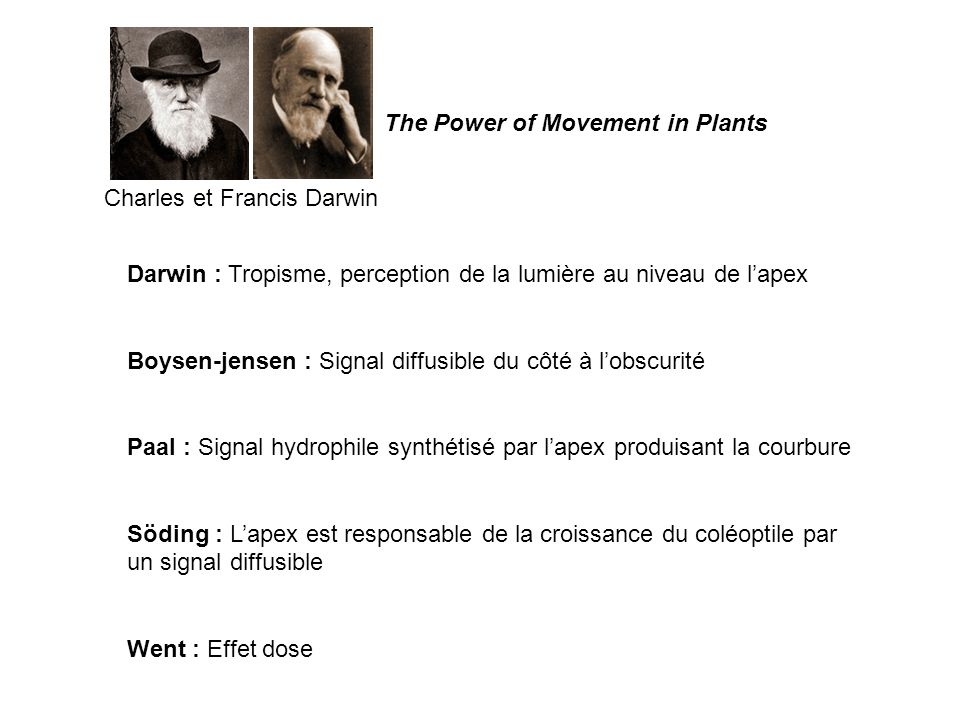 Charles et Francis Darwin Darwin : Tropisme, perception de la lumière au niveau de lapex Boysen-jensen : Signal diffusible du côté à lobscurité Paal :