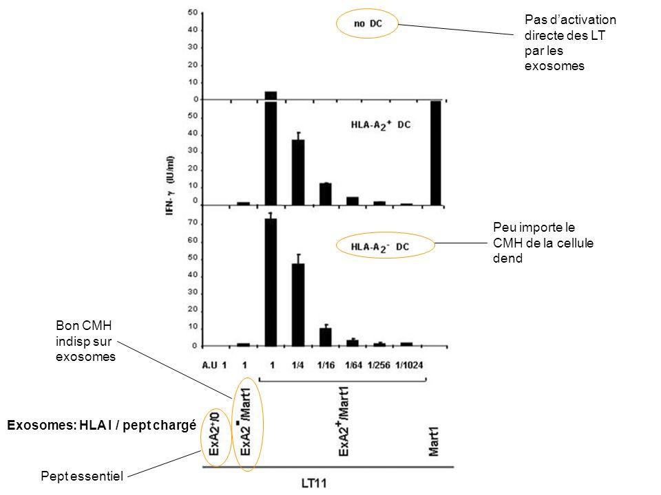 Exosomes: HLA I / pept chargé Bon CMH indisp sur exosomes Peu importe le CMH de la cellule dend Pas dactivation directe des LT par les exosomes Pept essentiel
