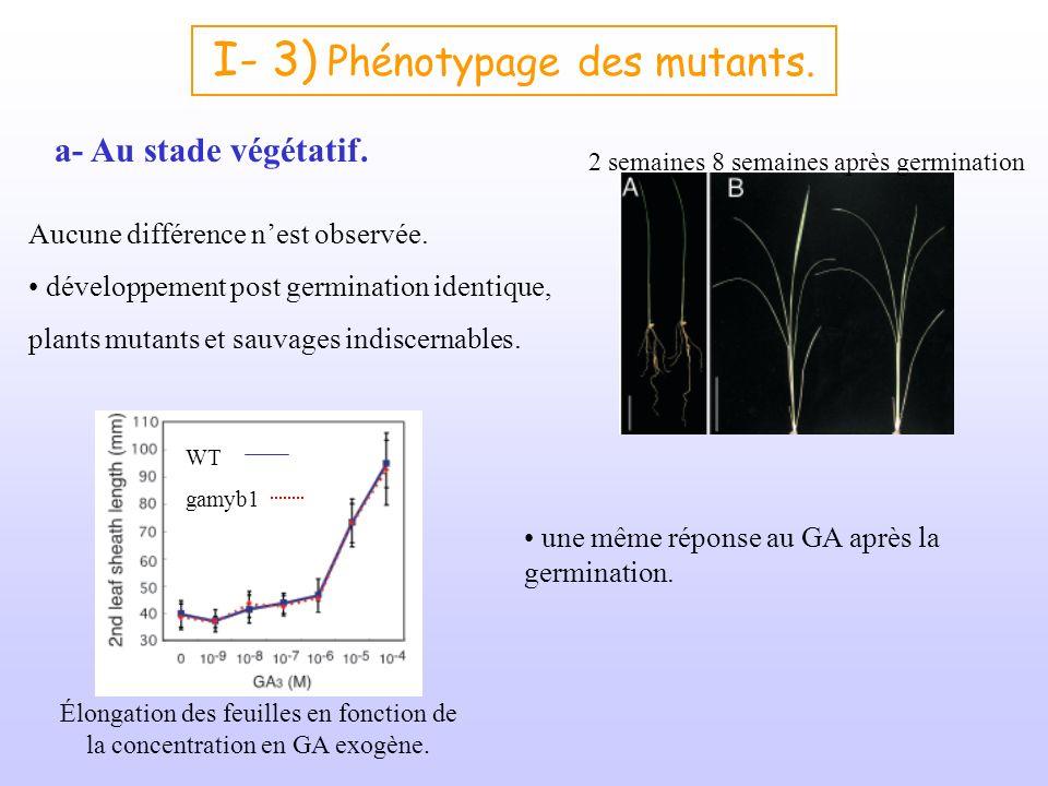 I- 3) Phénotypage des mutants. a- Au stade végétatif. Aucune différence nest observée. développement post germination identique, plants mutants et sau