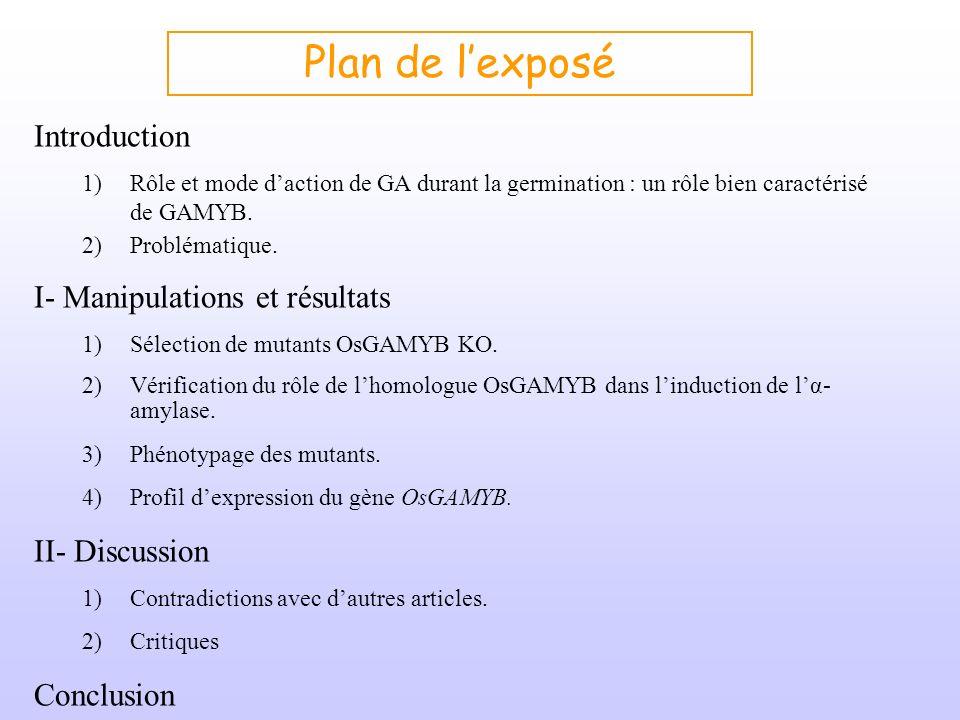 Introduction : Rôle de lacide gibbérellique (GA) lors de la germination Exemple du caryopse dOrge Albumen Tégument + péricarpe Couche à aleurone Scutellum Embryon AMIDON Glucides simples GA α-amylase