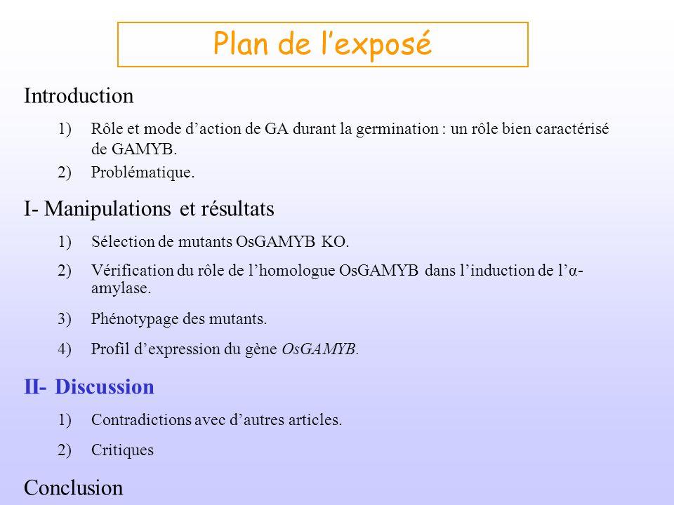 Plan de lexposé Introduction 1)Rôle et mode daction de GA durant la germination : un rôle bien caractérisé de GAMYB. 2)Problématique. I- Manipulations