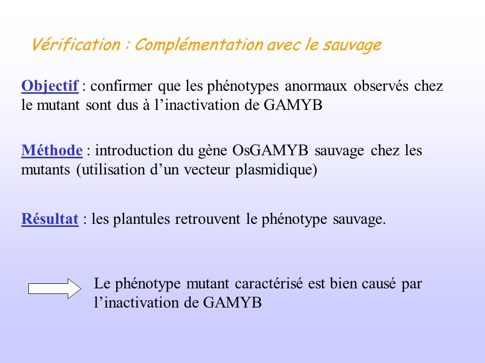 Objectif : confirmer que les phénotypes anormaux observés chez le mutant sont dus à linactivation de GAMYB Méthode : introduction du gène OsGAMYB sauv