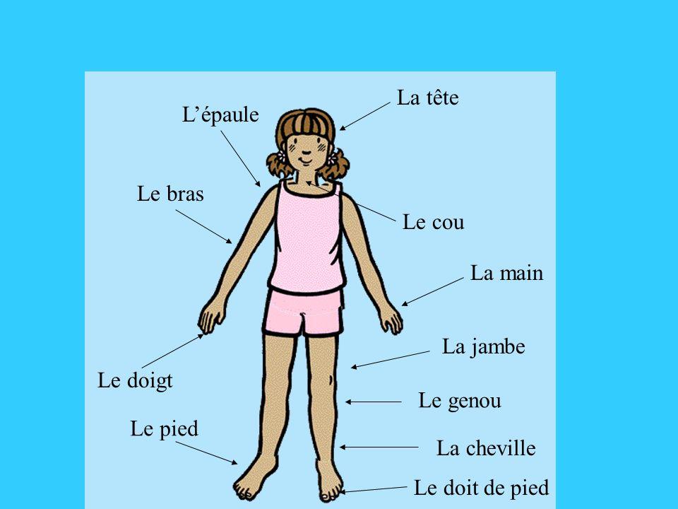 La tête Le cou Le bras La main La jambe Le pied Lépaule Le genou La cheville Le doigt Le doit de pied