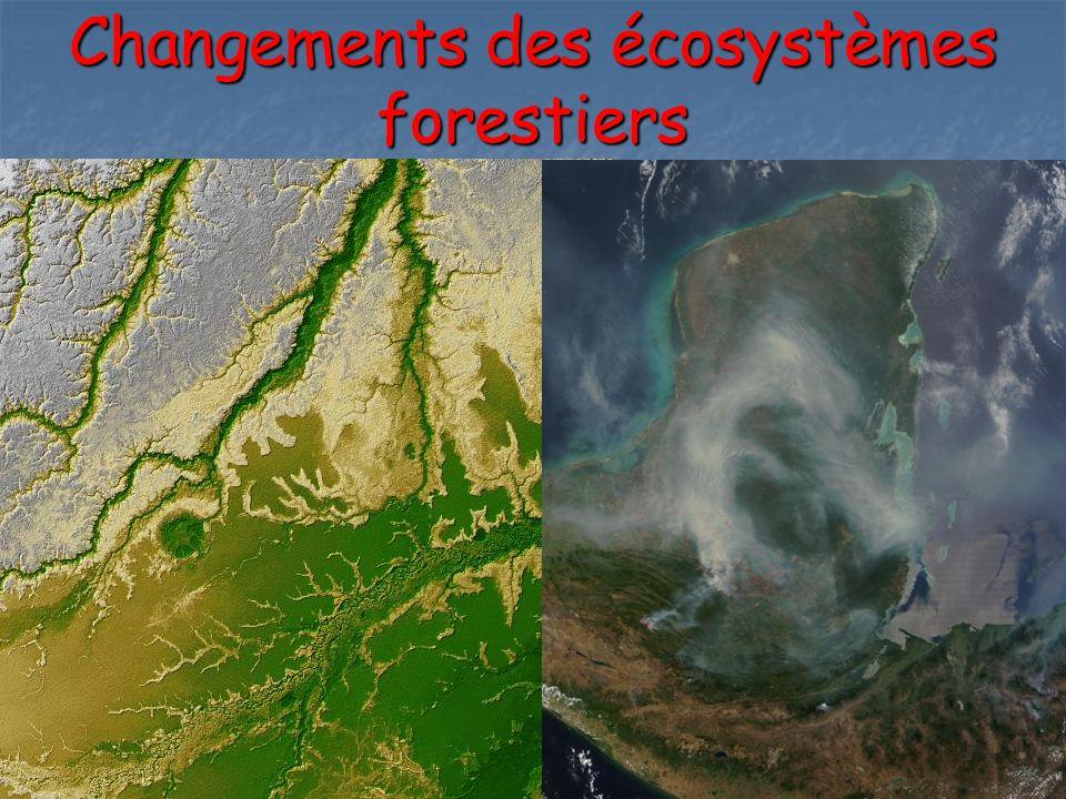 Changements des écosystèmes forestiers