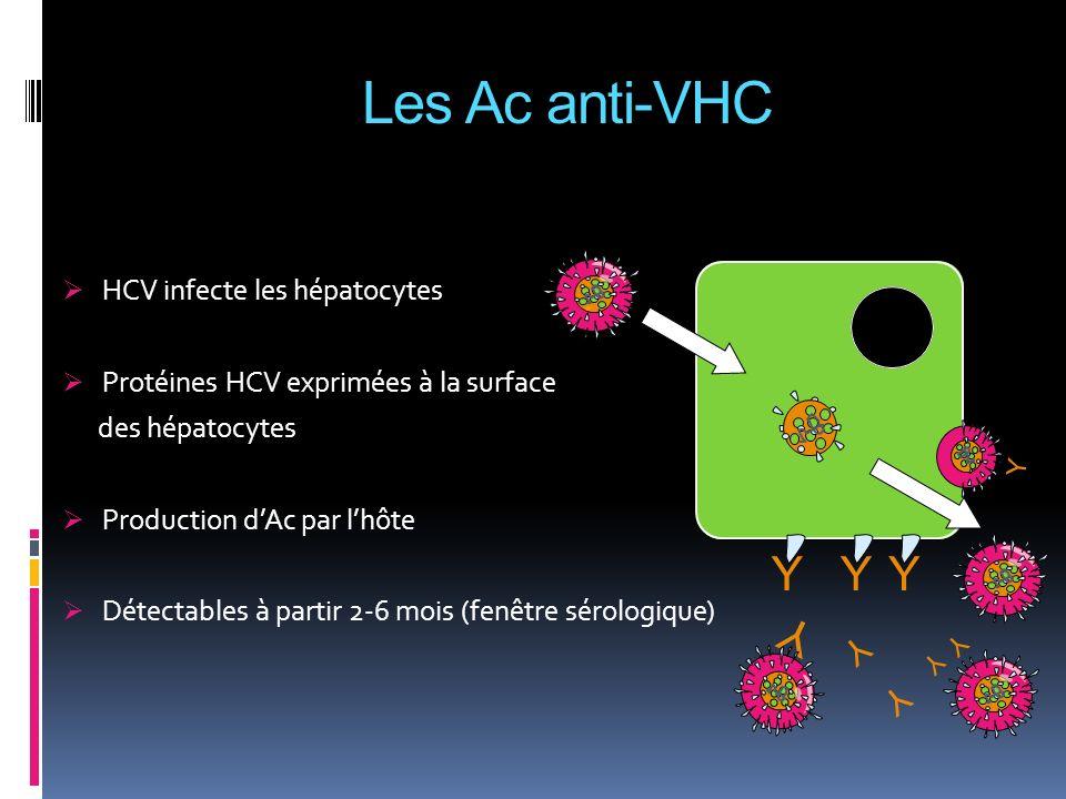 Y Y YYY Y Y Y Y HCV infecte les hépatocytes Protéines HCV exprimées à la surface des hépatocytes Production dAc par lhôte Détectables à partir 2-6 moi