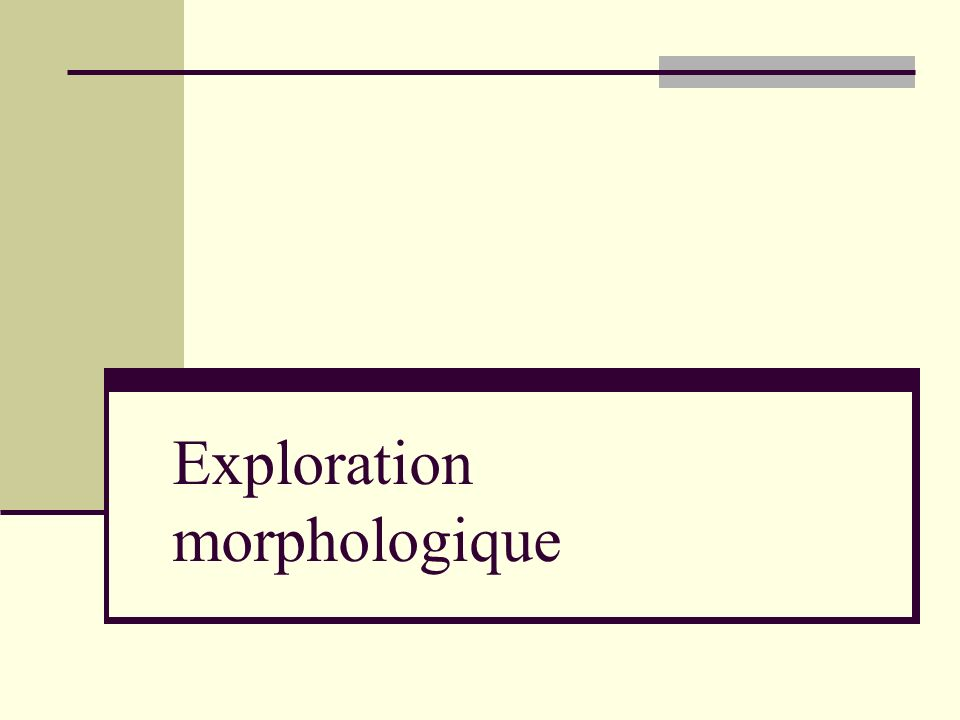Exploration morphologique