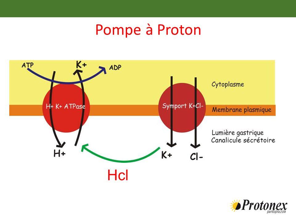 Pompe à Proton Hcl Canalicule sécrétoire