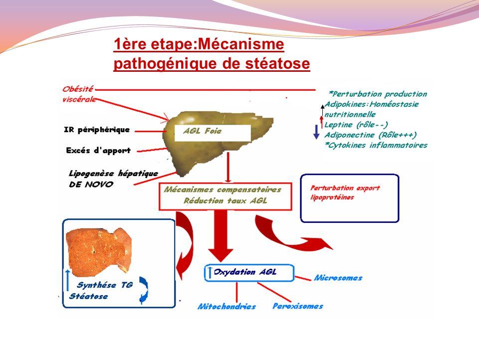 oxydation des AG B oxydation mitochondriale Oxydation peroxymale et microsomiale ROS RLO+++ consommation anti-oxydants Stress oxydatif Dysfonctionnement mitochondrial ATP mort hépatocyte cytotoxicité Ballonisation/ nécrose Stade intermédiaire:Mecanisme pathogénique de la stéatohépatite