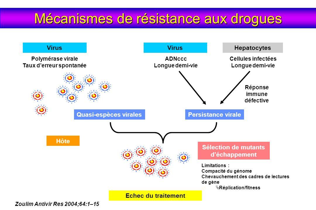 Persistance virale ADNccc Longue demi-vie Cellules infectées Longue demi-vie Réponse immune défective VirusHepatocytes Limitations : Compacité du géno