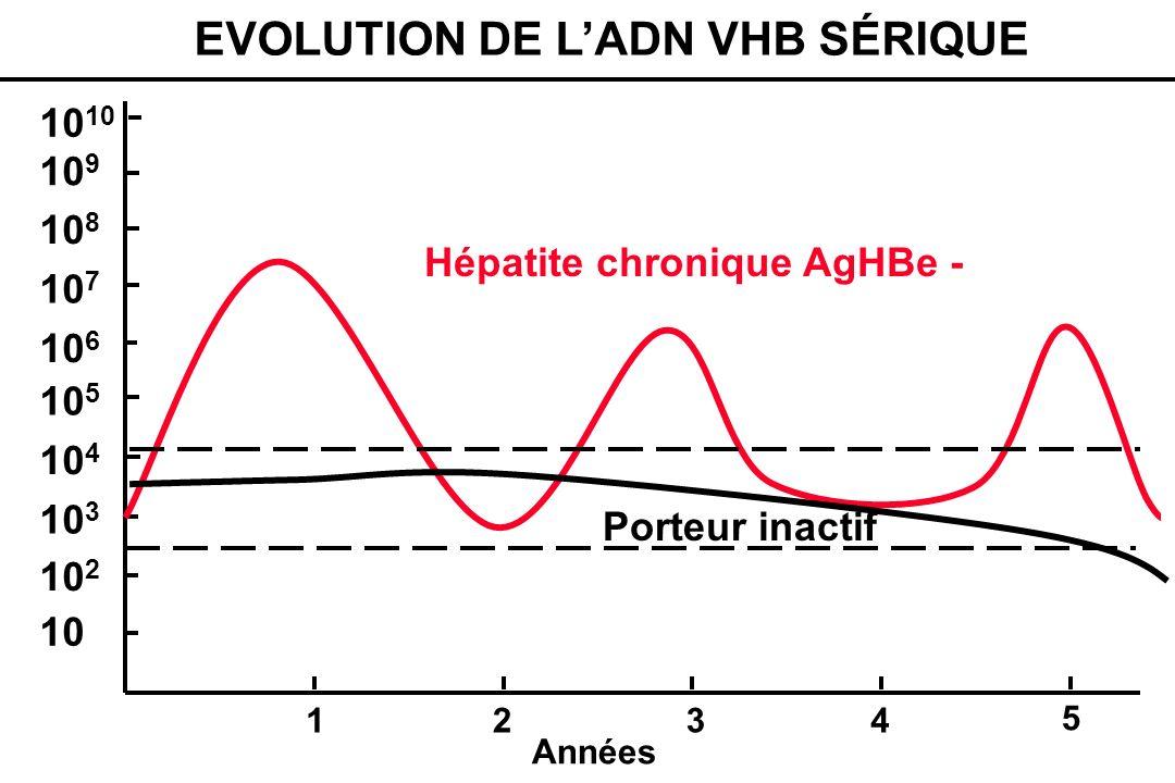 10 10 2 10 3 10 4 10 5 10 6 10 7 10 8 10 9 10 1234 Années Hépatite chronique AgHBe - Porteur inactif 5 EVOLUTION DE LADN VHB SÉRIQUE