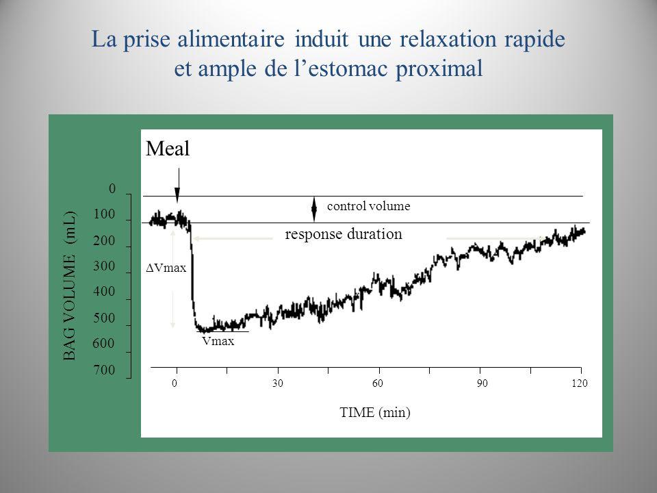 Relaxation gastrique post-prandiale dans la dyspepsie 1201059075604530150 300 200 100 0 Contrôles Dyspepsie Temps (min) V (mL) * ** *** Zerbib et al.