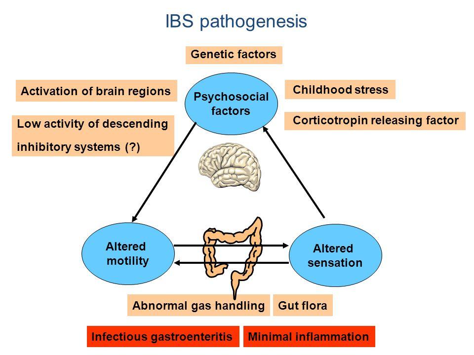 IBS pathogenesis Infectious gastroenteritisMinimal inflammation Abnormal gas handlingGut flora Activation of brain regions Low activity of descending