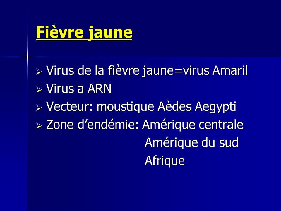 Fièvre jaune Virus de la fièvre jaune=virus Amaril Virus de la fièvre jaune=virus Amaril Virus a ARN Virus a ARN Vecteur: moustique Aèdes Aegypti Vect