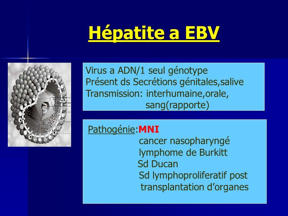 Hépatite a EBV Hépatite a EBV Virus a ADN/1 seul génotype Présent ds Secrétions génitales,salive Transmission: interhumaine,orale, sang(rapporte) Path