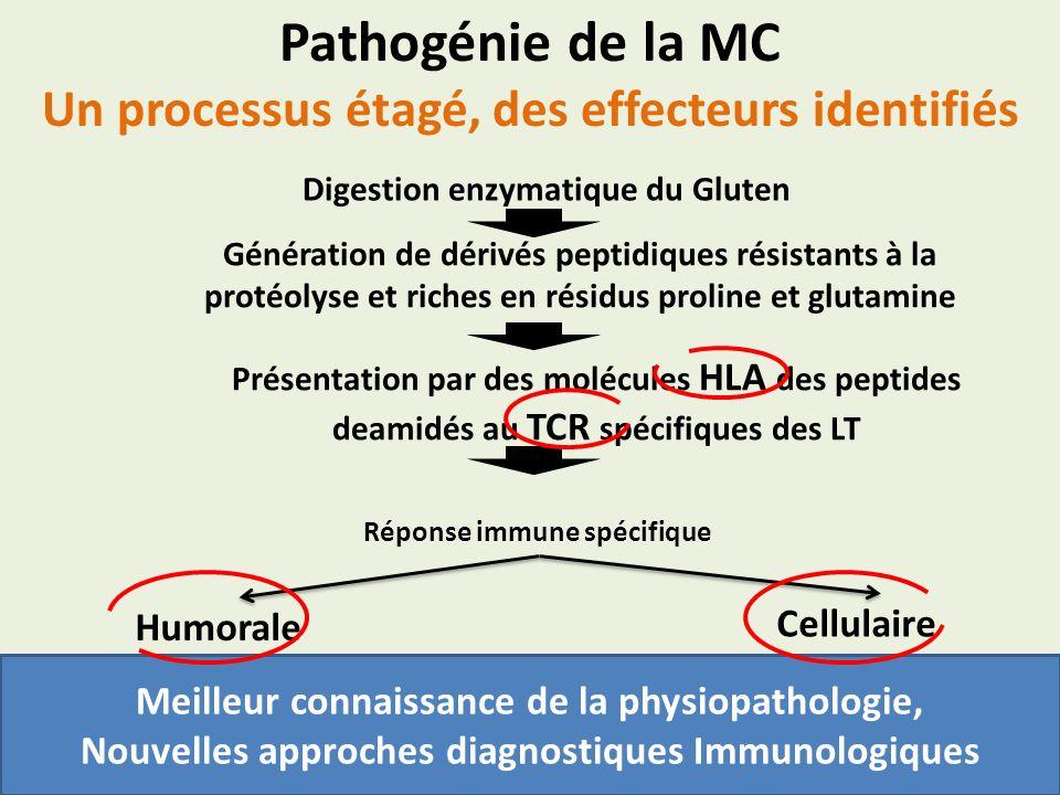 Digestion enzymatique du Gluten Génération de dérivés peptidiques résistants à la protéolyse et riches en résidus proline et glutamine Présentation pa