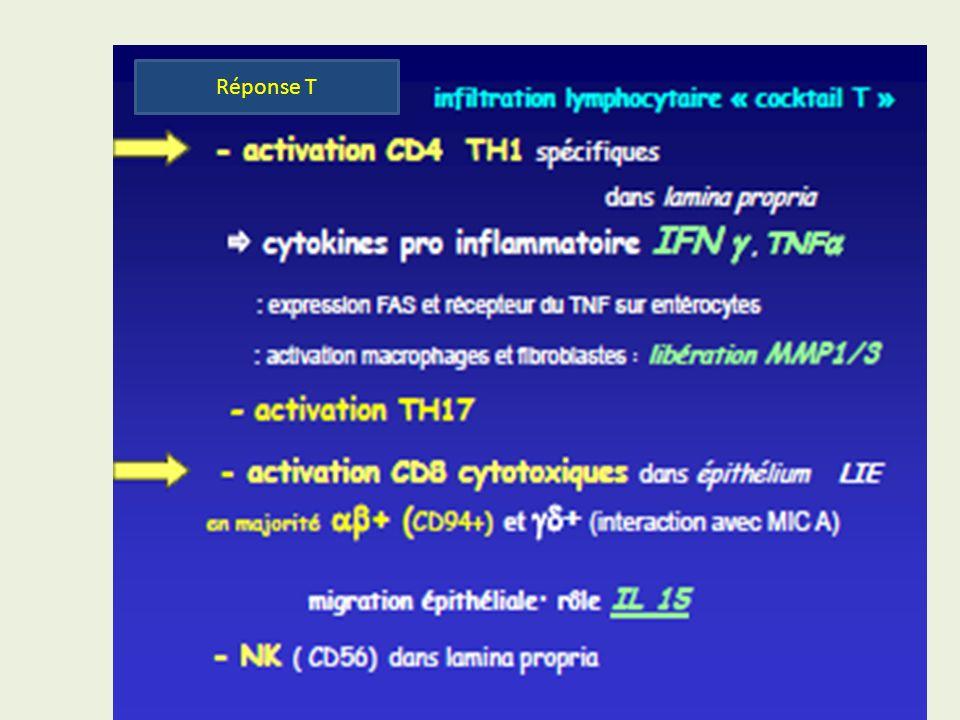 Tétramères: HLA DQ2-peptide gliadine Une réponse spécifique à la MC