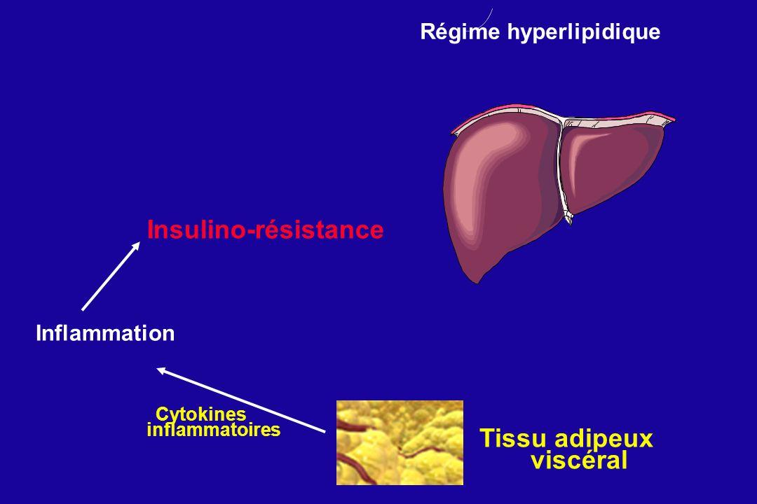 Cytokines inflammatoires Inflammation Régime hyperlipidique Tissu adipeux viscéral Insulino-résistance