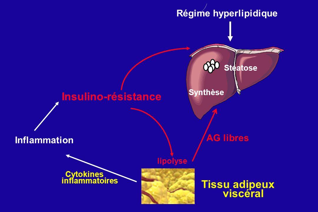 Insulino-résistance Cytokines inflammatoires AG libres Inflammation Régime hyperlipidique lipolyse Synthèse Stéatose Tissu adipeux viscéral