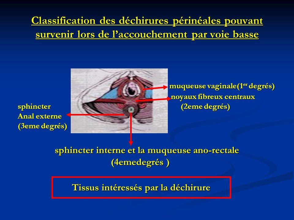 Classification des déchirures périnéales pouvant survenir lors de laccouchement par voie basse muqueuse vaginale(1 er degrés) muqueuse vaginale(1 er d