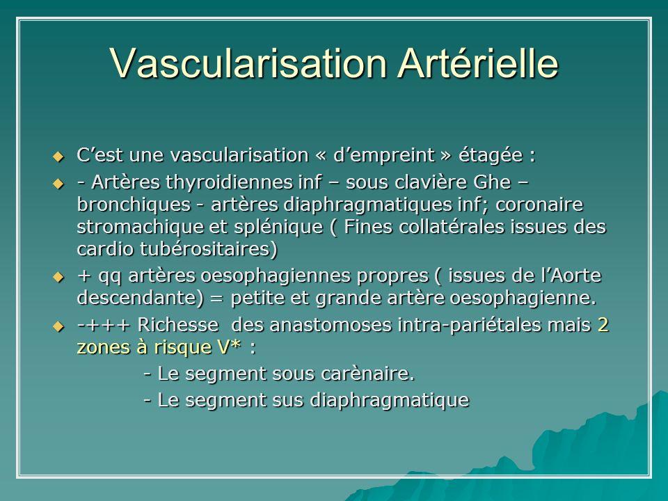 Vascularisation Artérielle Cest une vascularisation « dempreint » étagée : Cest une vascularisation « dempreint » étagée : - Artères thyroidiennes inf