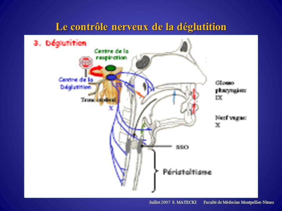Le contrôle nerveux de la déglutition Juillet 2007 S. MATECKI Faculté de Médecine Montpellier-Nîmes