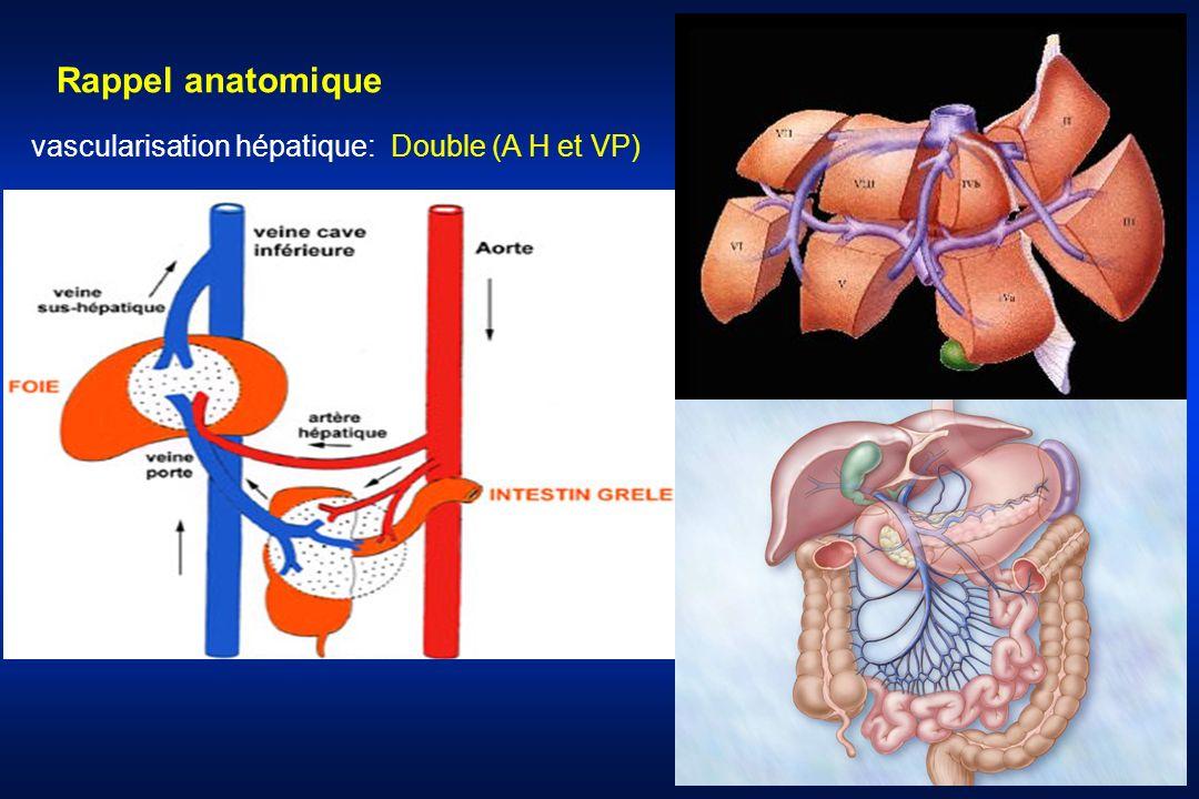 vascularisation hépatique: Double (A H et VP) Rappel anatomique