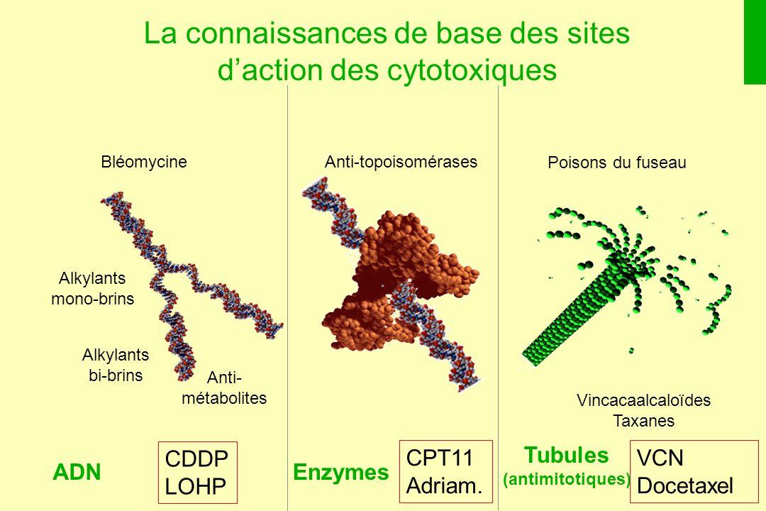 La connaissances de base des sites daction des cytotoxiques Enzymes Anti-topoisomérases Tubules (antimitotiques) Vincacaalcaloïdes Taxanes Poisons du