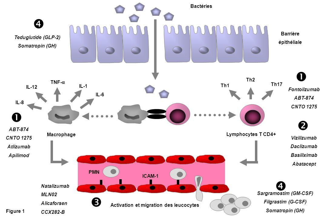 Figure 1 Lymphocytes T CD4+ Macrophage Activation et migration des leucocytes Bactéries IL-1 IL-6 IL-12 IL-8 TNF- Th17 Th2 Th1 ICAM-1 Vizilizumab Dacl