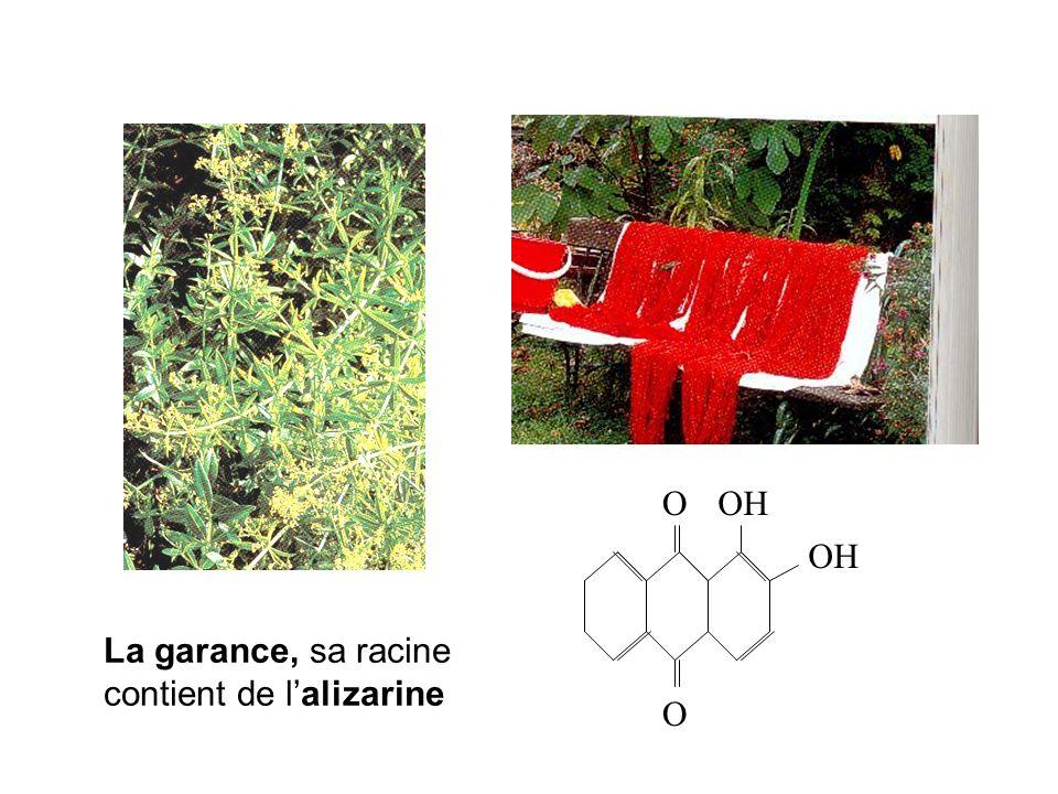 La garance, sa racine contient de lalizarine O OOH
