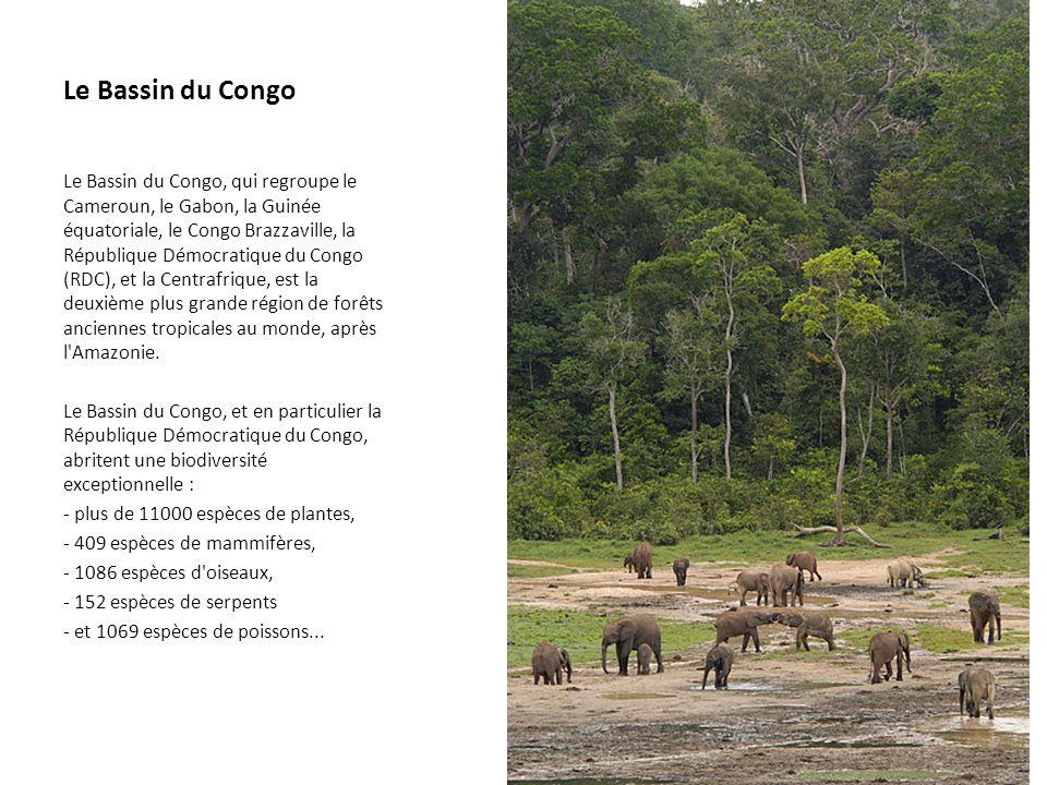 Le Bassin du Congo Le Bassin du Congo, qui regroupe le Cameroun, le Gabon, la Guinée équatoriale, le Congo Brazzaville, la République Démocratique du