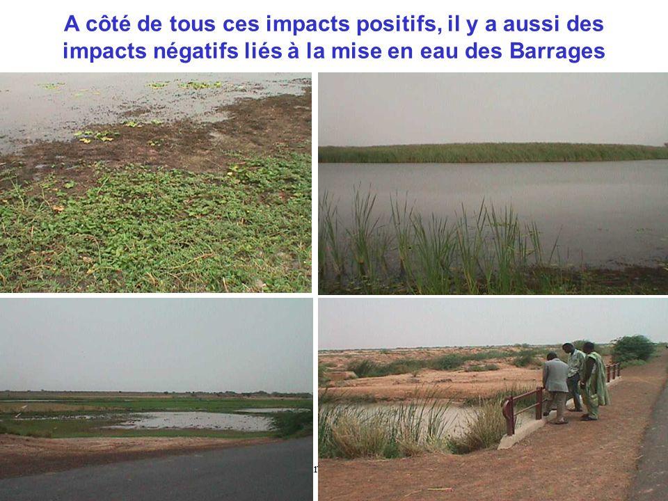 Tamsir SOE-OMVS12 A côté de tous ces impacts positifs, il y a aussi des impacts négatifs liés à la mise en eau des Barrages