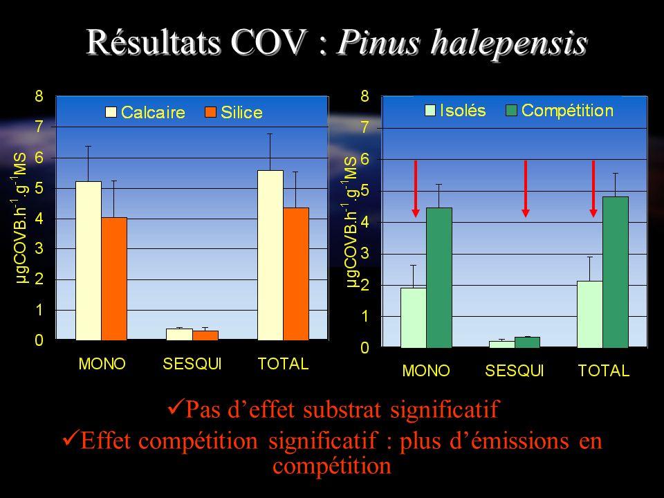 Résultats COV : Pinus halepensis Pas deffet substrat significatif Effet compétition significatif : plus démissions en compétition