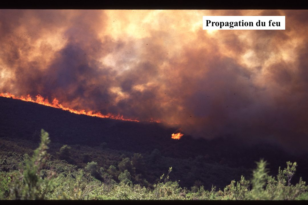 GIS Incendies de Forêt, Marseille, 4 décembre 2002, exposé 616 Propagation du feu