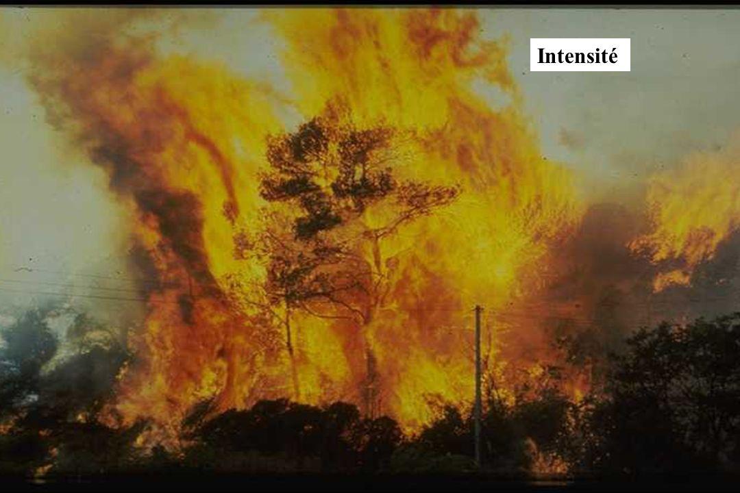 GIS Incendies de Forêt, Marseille, 4 décembre 2002, exposé 618 Intensité
