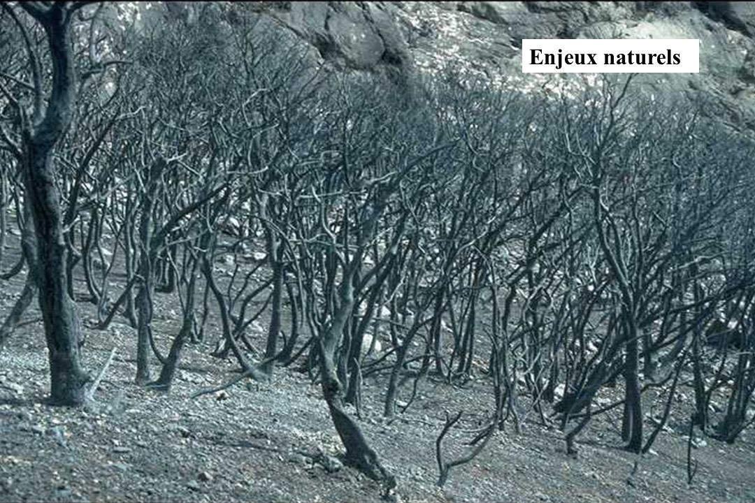 GIS Incendies de Forêt, Marseille, 4 décembre 2002, exposé 620 Enjeux naturels