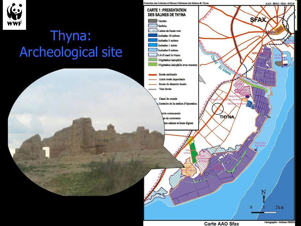 Thyna: Archeological site