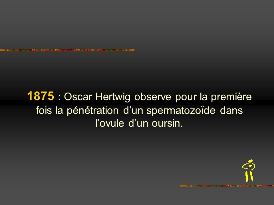 1875 : Oscar Hertwig observe pour la première fois la pénétration dun spermatozoïde dans lovule dun oursin.