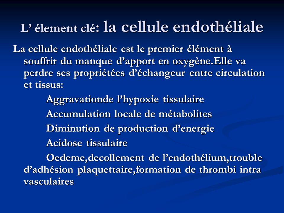 L élement clé : la cellule endothéliale La cellule endothéliale est le premier élément à souffrir du manque dapport en oxygène.Elle va perdre ses prop