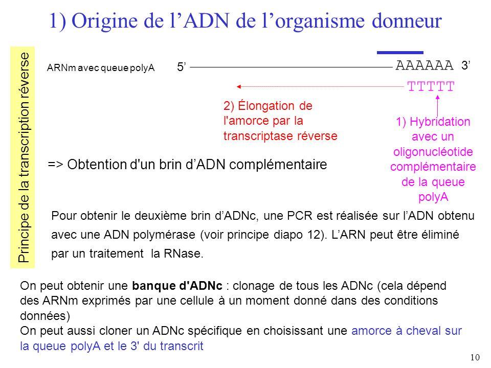 10 1) Origine de lADN de lorganisme donneur AAAAAA 3 ARNm avec queue polyA 5 => Obtention d'un brin dADN complémentaire Pour obtenir le deuxième brin