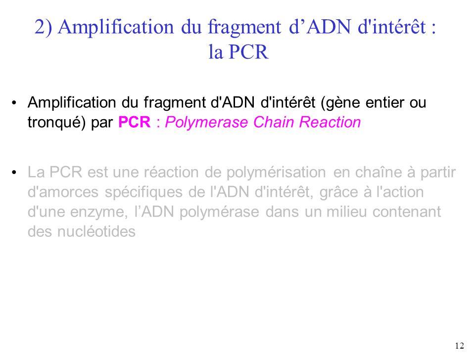 12 2) Amplification du fragment dADN d'intérêt : la PCR Amplification du fragment d'ADN d'intérêt (gène entier ou tronqué) par PCR : Polymerase Chain