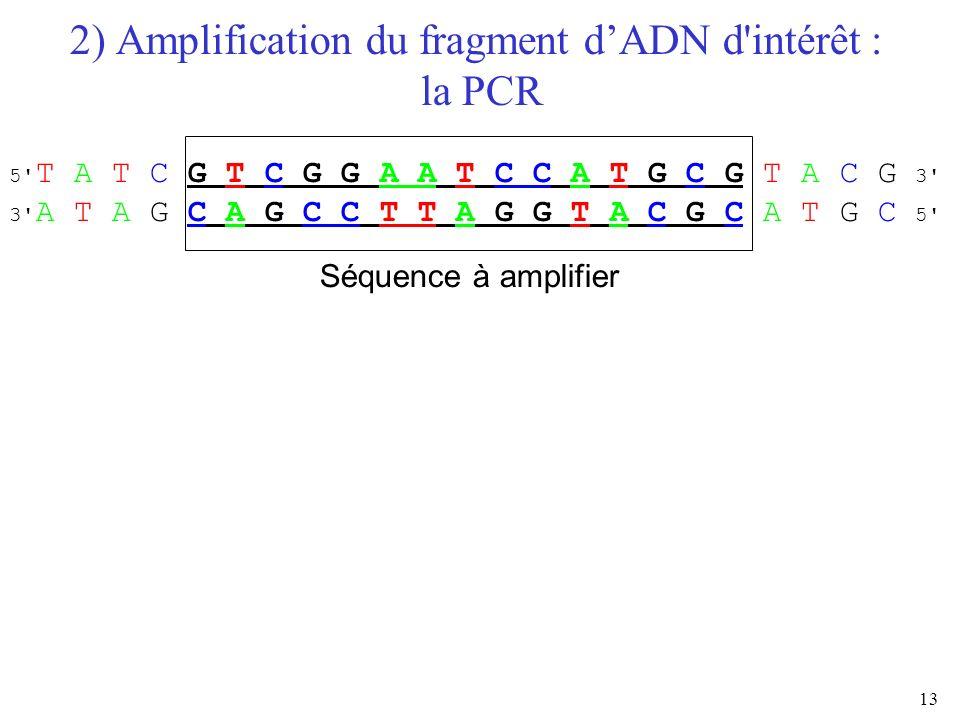 13 2) Amplification du fragment dADN d'intérêt : la PCR Séquence à amplifier 5' T A T C G T C G G A A T C C A T G C G T A C G 3' 3' A T A G C A G C C
