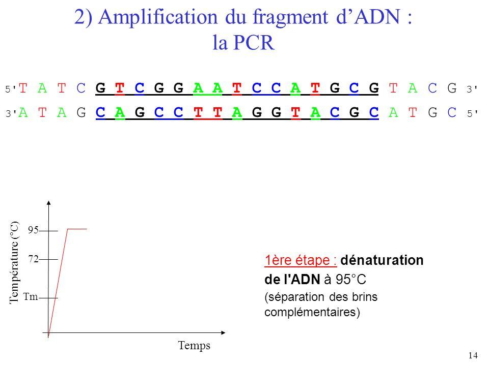 14 2) Amplification du fragment dADN : la PCR Temps Température (°C) 95 72 Tm 1ère étape : dénaturation de l'ADN à 95°C (séparation des brins compléme