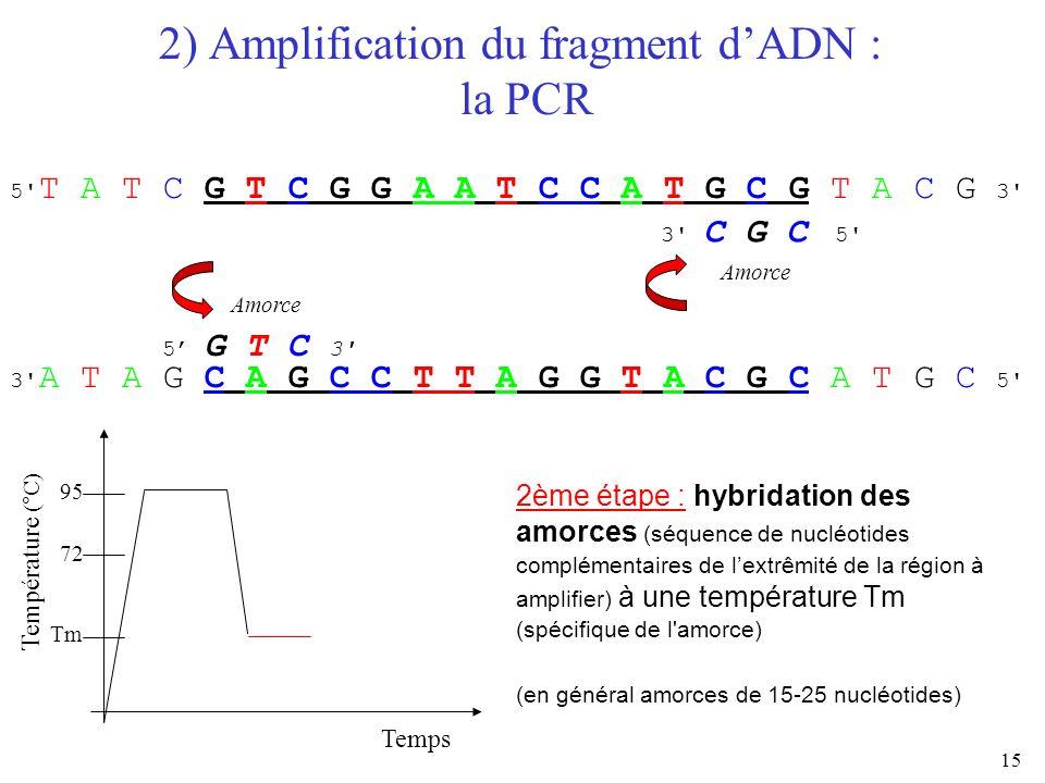 15 2) Amplification du fragment dADN : la PCR Temps Température (°C) 95 72 Tm 5' T A T C G T C G G A A T C C A T G C G T A C G 3' 3' A T A G C A G C C