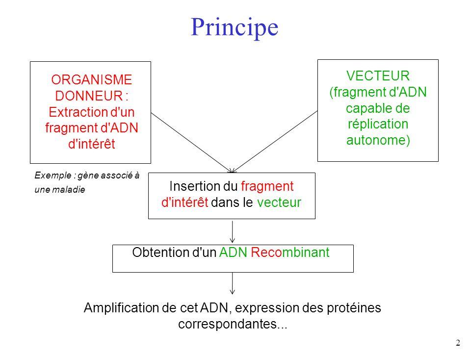 2 ORGANISME DONNEUR : Extraction d'un fragment d'ADN d'intérêt VECTEUR (fragment d'ADN capable de réplication autonome) Principe Insertion du fragment