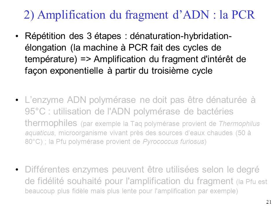 21 Répétition des 3 étapes : dénaturation-hybridation- élongation (la machine à PCR fait des cycles de température) => Amplification du fragment d'int