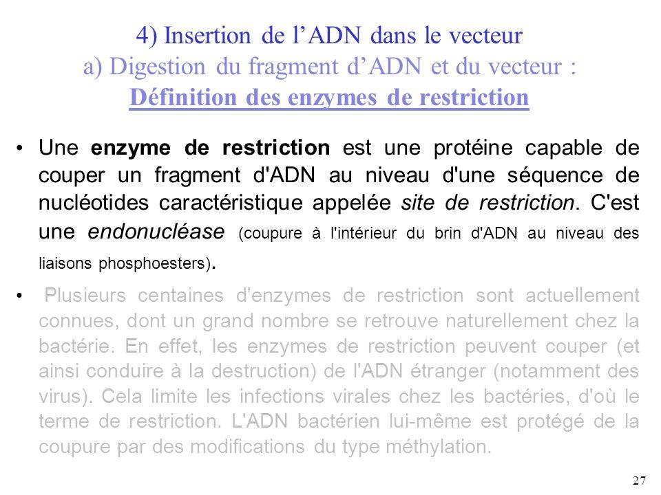 27 4) Insertion de lADN dans le vecteur a) Digestion du fragment dADN et du vecteur : Définition des enzymes de restriction Une enzyme de restriction