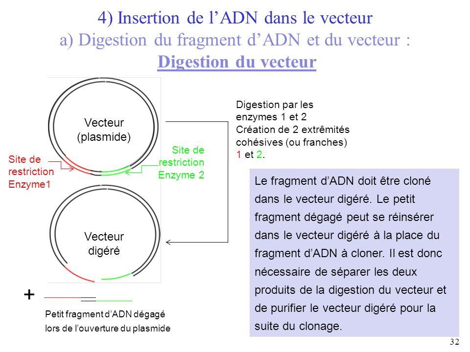 32 4) Insertion de lADN dans le vecteur a) Digestion du fragment dADN et du vecteur : Digestion du vecteur Vecteur (plasmide) Vecteur digéré + Petit f