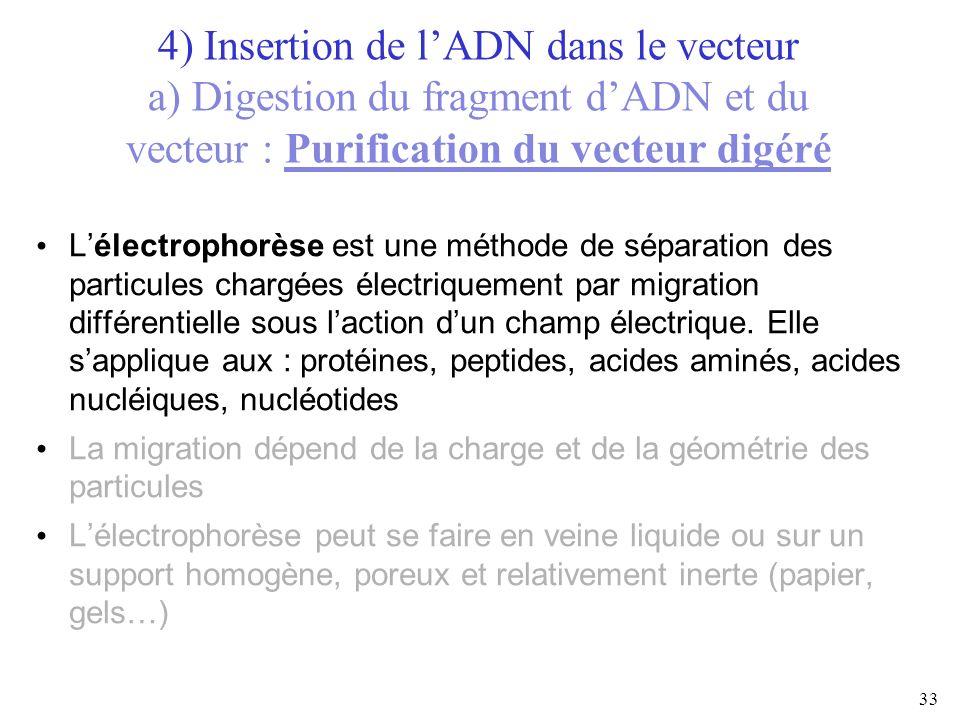 33 4) Insertion de lADN dans le vecteur a) Digestion du fragment dADN et du vecteur : Purification du vecteur digéré Lélectrophorèse est une méthode d